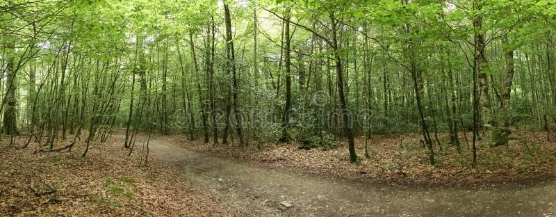 Camino的de圣地亚哥森林在奥雷亚加 图库摄影