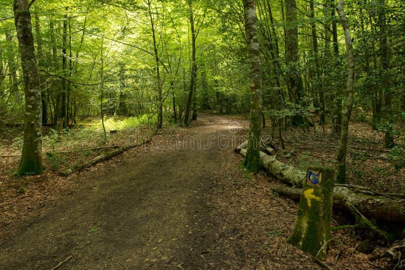 Camino的de圣地亚哥森林奥雷亚加 免版税库存图片