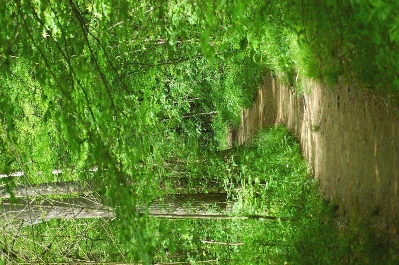 Download Camino imagen de archivo. Imagen de parques, alza, exploración - 175339