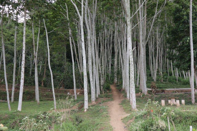Camino al bosque imagen de archivo libre de regalías