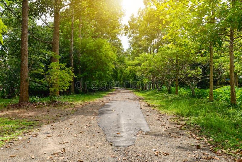 Camino al bosque con muchos árboles con la luz caliente del sol imagenes de archivo