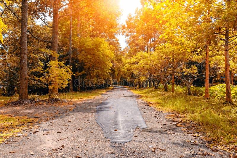 Camino al bosque con muchos árboles al lado de la manera foto de archivo