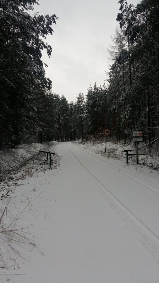 Camino al bosque del invierno fotografía de archivo libre de regalías