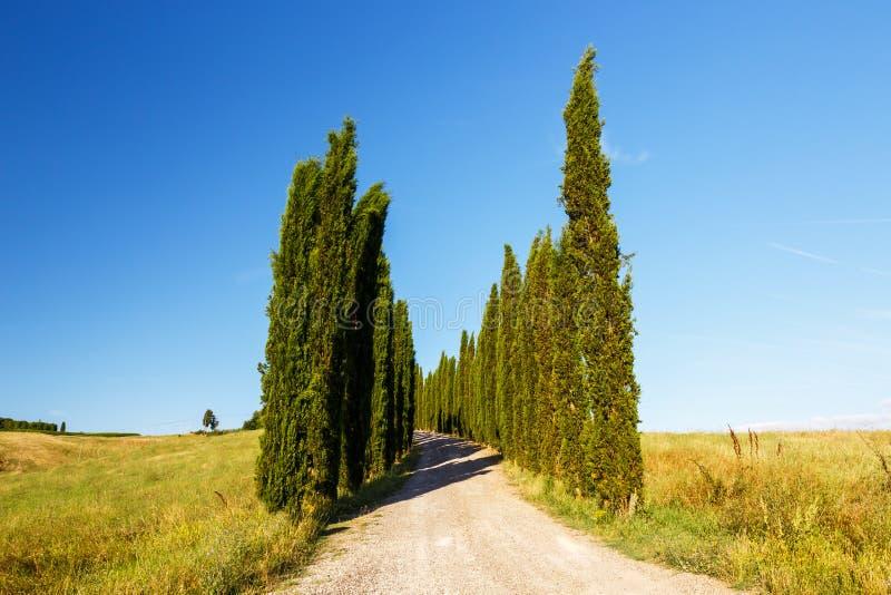 Camino al cortijo, Toscana, Italia imagen de archivo libre de regalías