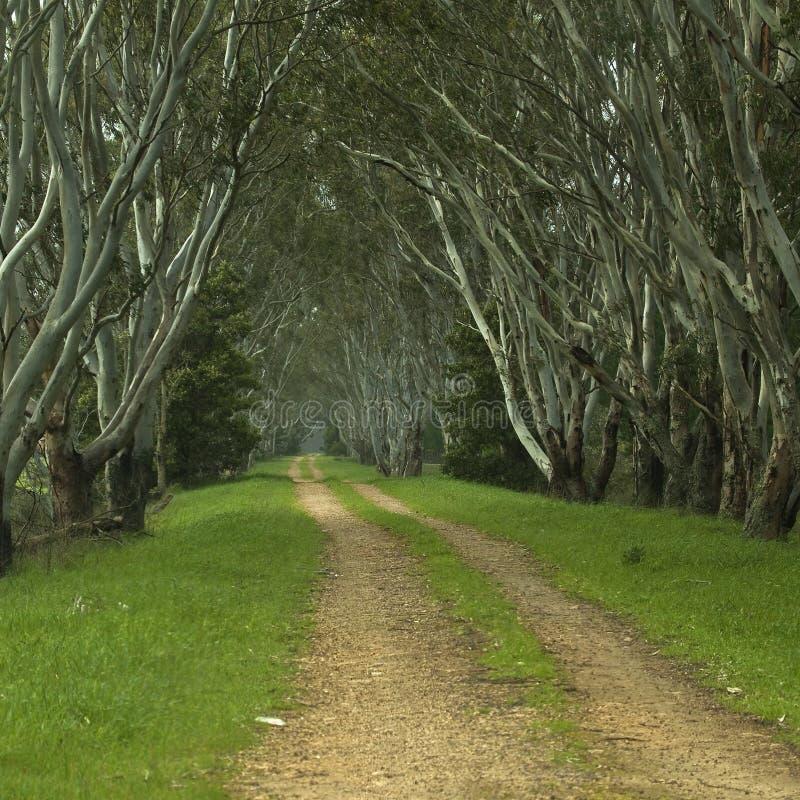 Camino alineado árbol imágenes de archivo libres de regalías
