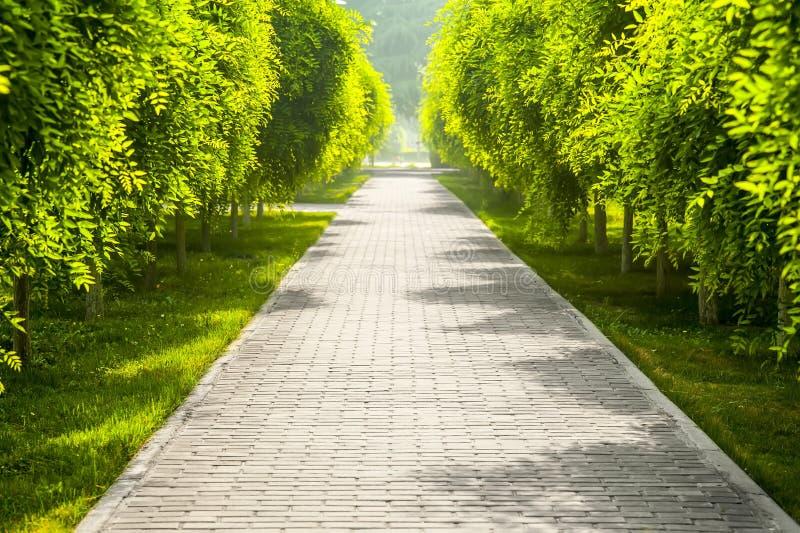 Camino alineado árbol fotografía de archivo libre de regalías