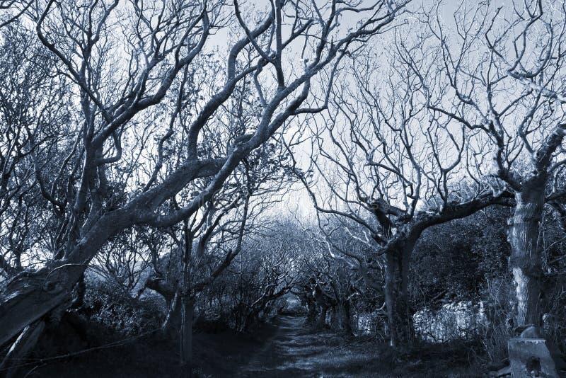 Camino alineado árbol espeluznante fotografía de archivo libre de regalías