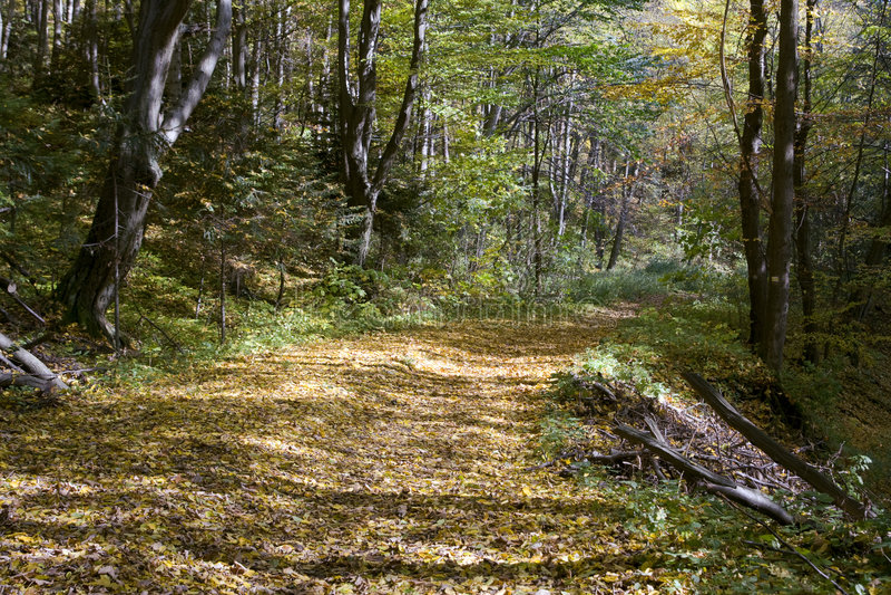 Camino asoleado foto de archivo