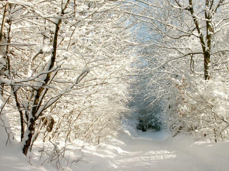 Camino asoleado del invierno imagen de archivo