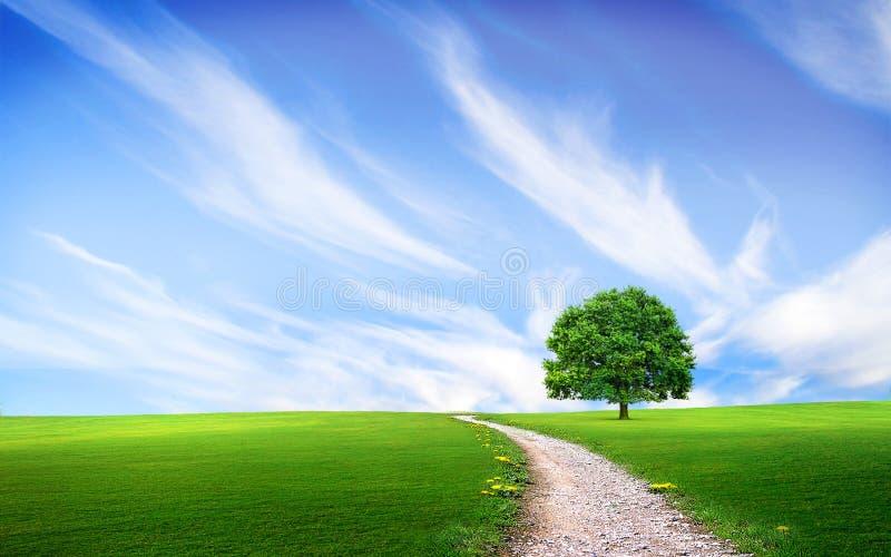 Camino cerca del árbol en el campo verde stock de ilustración
