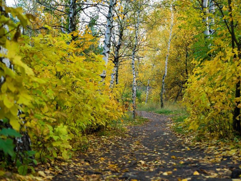 Camino con el paisaje hermoso del otoño del bosque del otoño foto de archivo