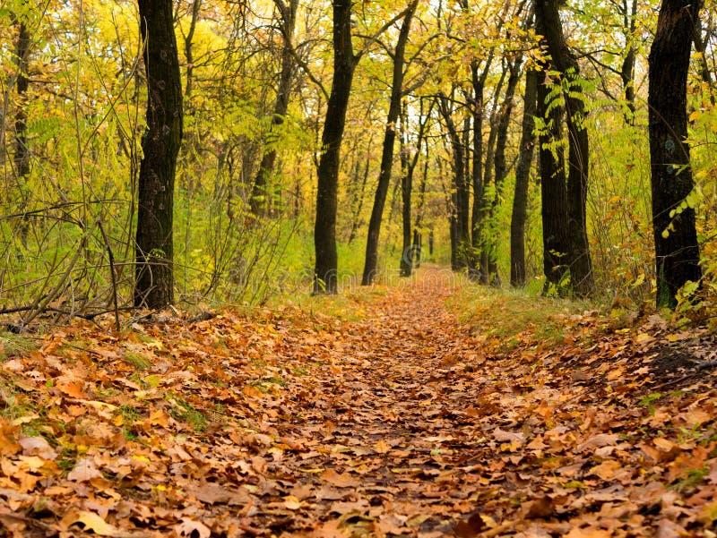 Camino con el paisaje hermoso del otoño del bosque del otoño imagen de archivo libre de regalías
