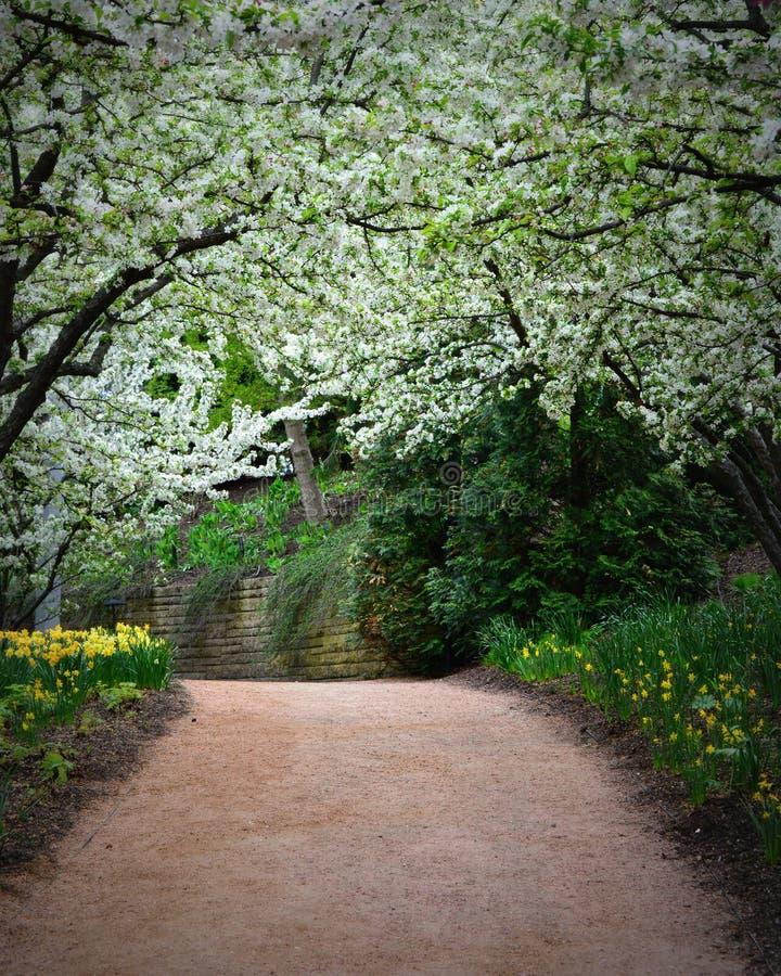 Camino con el toldo del flor de Apple fotos de archivo libres de regalías