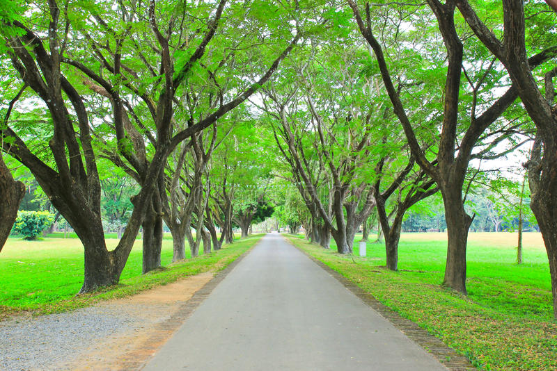 Camino con la fila de árboles imagen de archivo libre de regalías