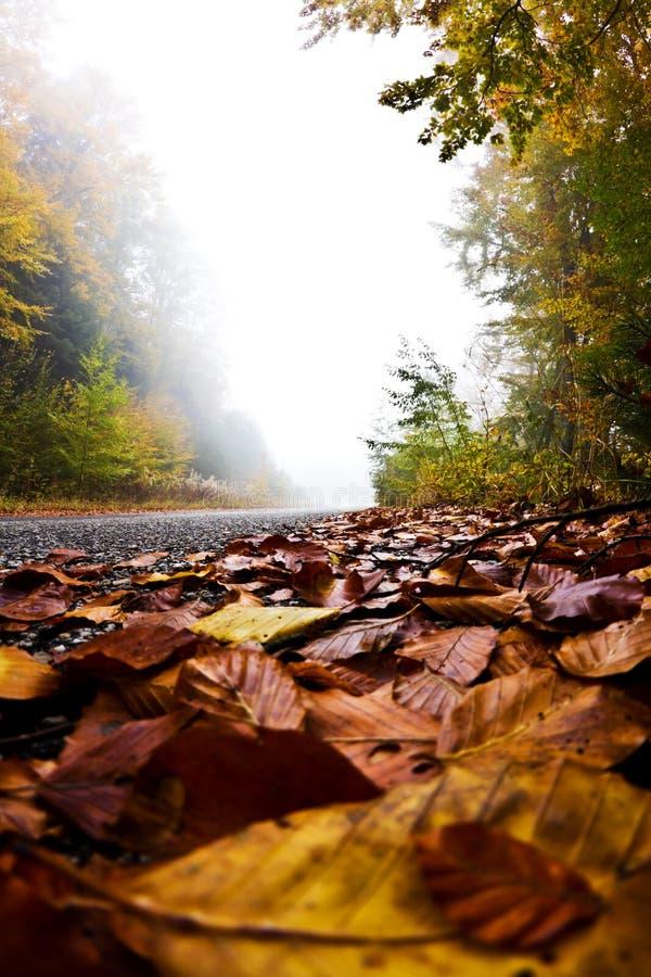 Camino con las hojas de otoño, montaña de Olympus, Grecia fotos de archivo libres de regalías