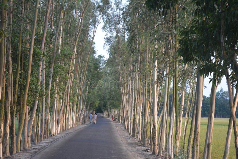 Camino con los árboles fotos de archivo libres de regalías