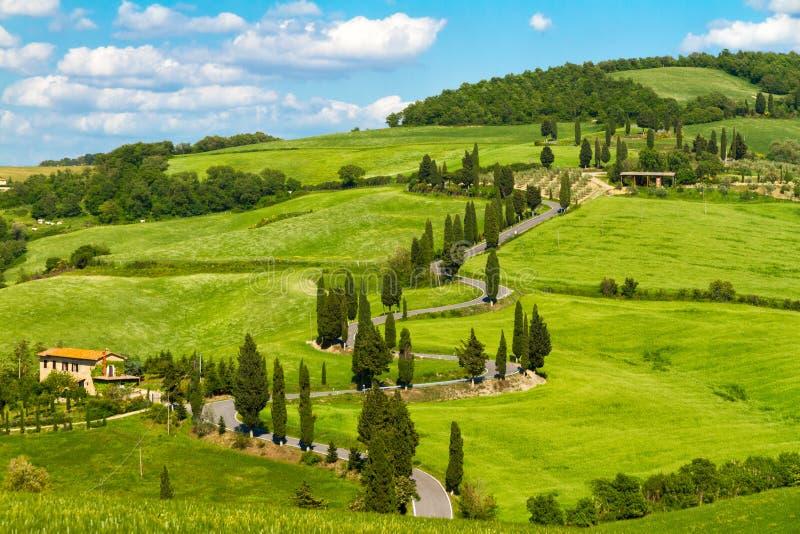 Camino con los árboles de ciprés, d'Orcia de Val, Italia de Toscana fotos de archivo libres de regalías