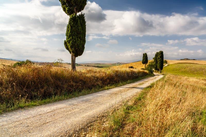 Camino con los cipreses en Toscana fotografía de archivo