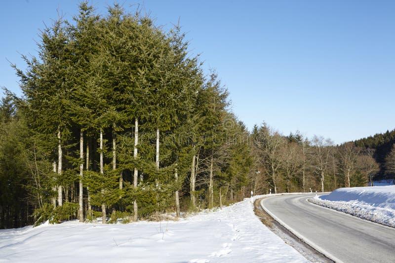 Camino con paisaje selvático con nieve foto de archivo libre de regalías