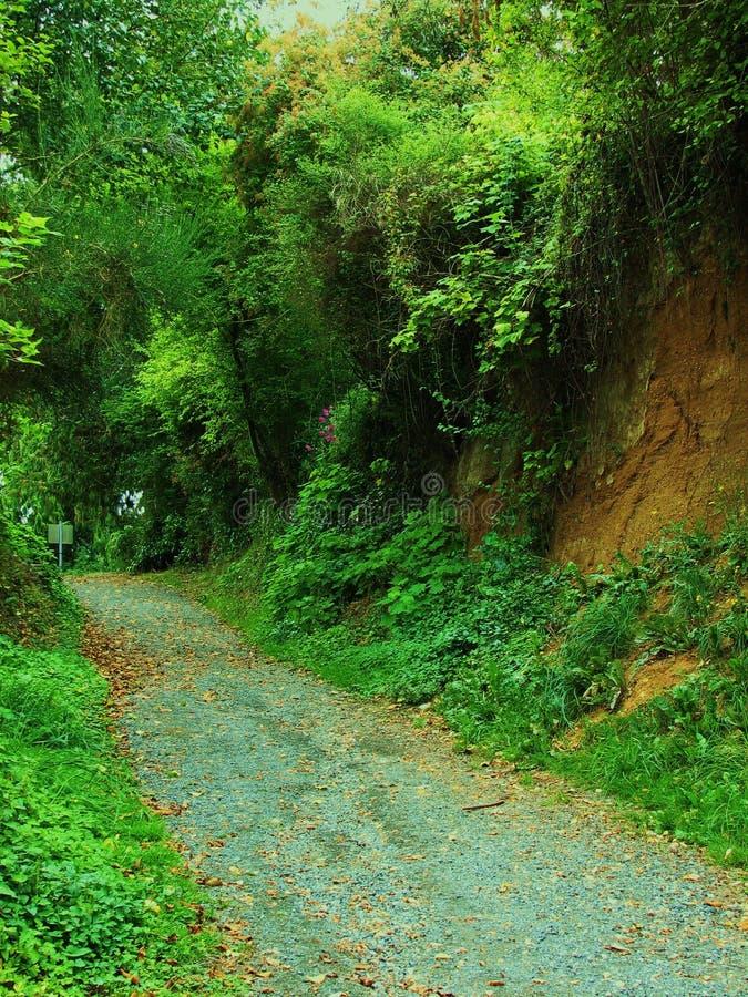Camino con pen¢ascos verdes fotografía de archivo