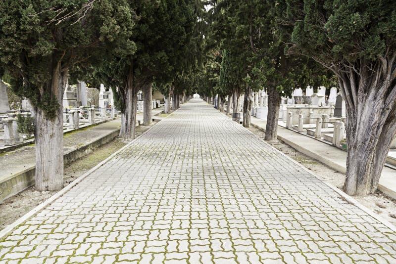 Camino con profundidad en un cementerio fotografía de archivo libre de regalías