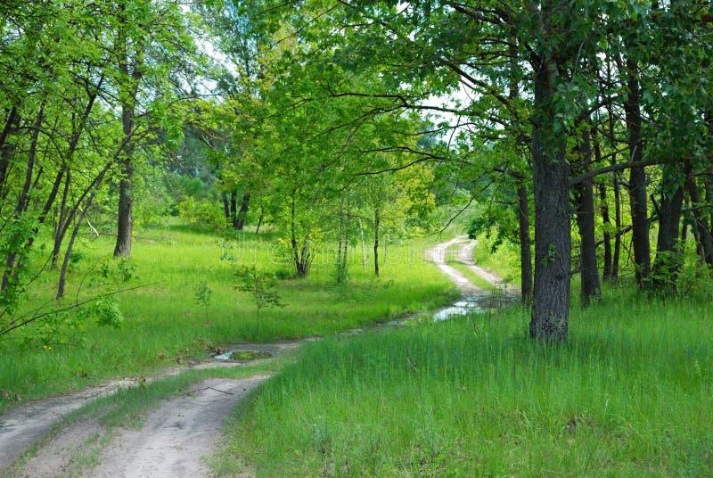 Camino curvado en bosque fotografía de archivo libre de regalías