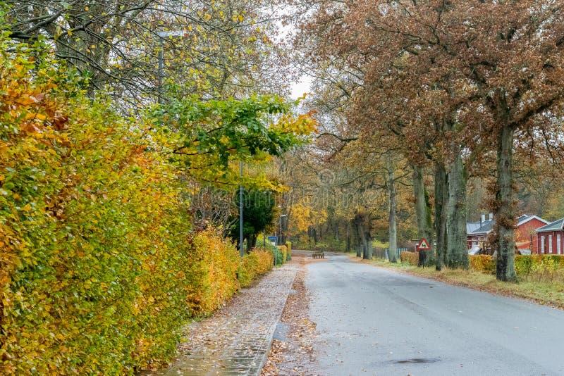 Camino de Autumn Danish en noviembre en Viborg, Dinamarca fotos de archivo libres de regalías