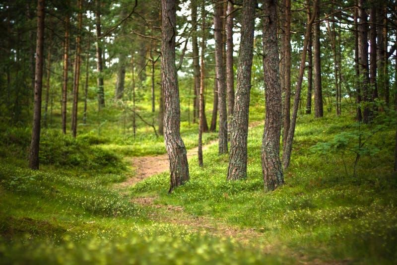 Camino de bosque fotografía de archivo libre de regalías