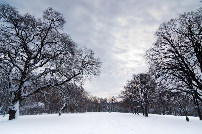 Camino de bosque a través de la nieve bajo las nubes pesadas imagenes de archivo