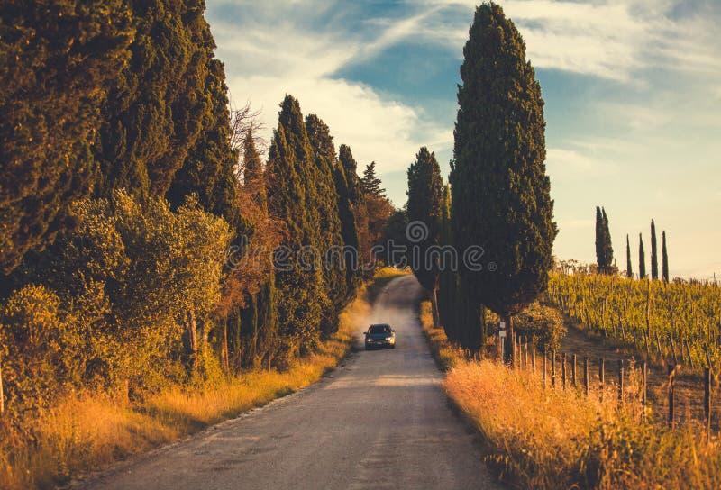 Camino de campo de Toscana con los cipreses fotografía de archivo