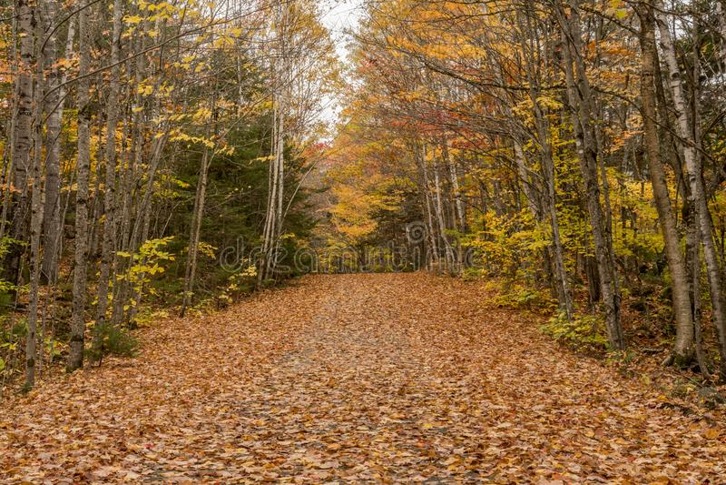 Camino de carro cubierto en hojas de la caída imágenes de archivo libres de regalías