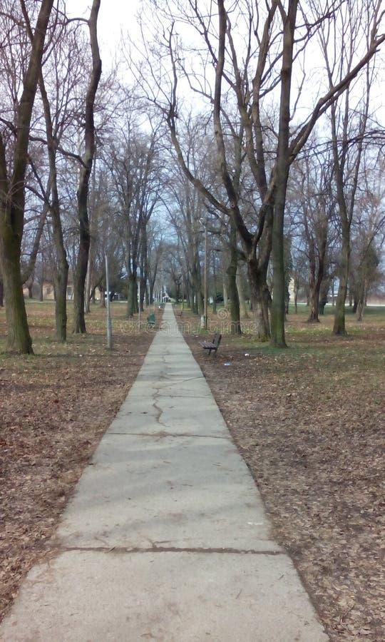 Camino de casa del árbol foto de archivo libre de regalías