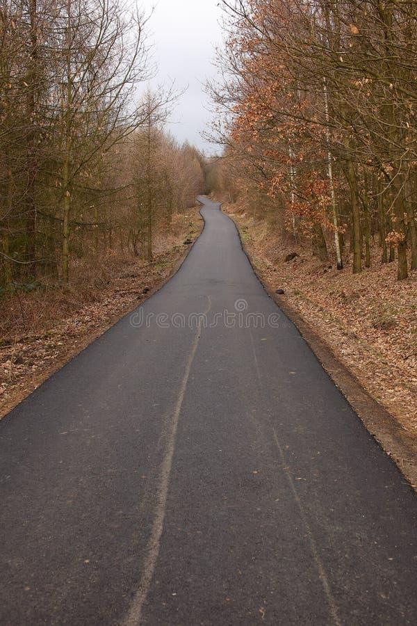 Camino de la bicicleta en el bosque imágenes de archivo libres de regalías