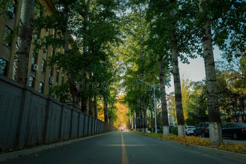 Camino de la caída en la universidad 3 imagen de archivo