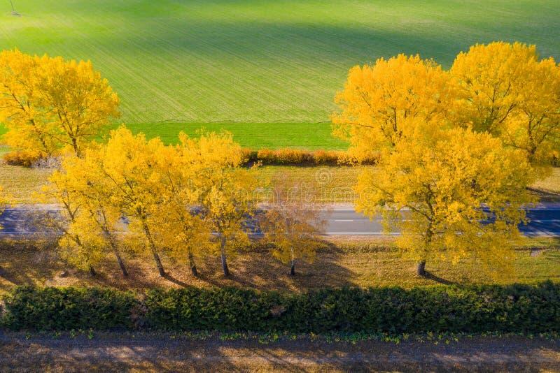 Camino de la caída Fondo aéreo con el camino Contexto del viaje Día asoleado del otoño Árboles con follaje amarillo imagen de archivo libre de regalías