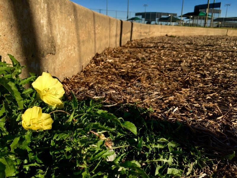 Camino de la flor foto de archivo libre de regalías