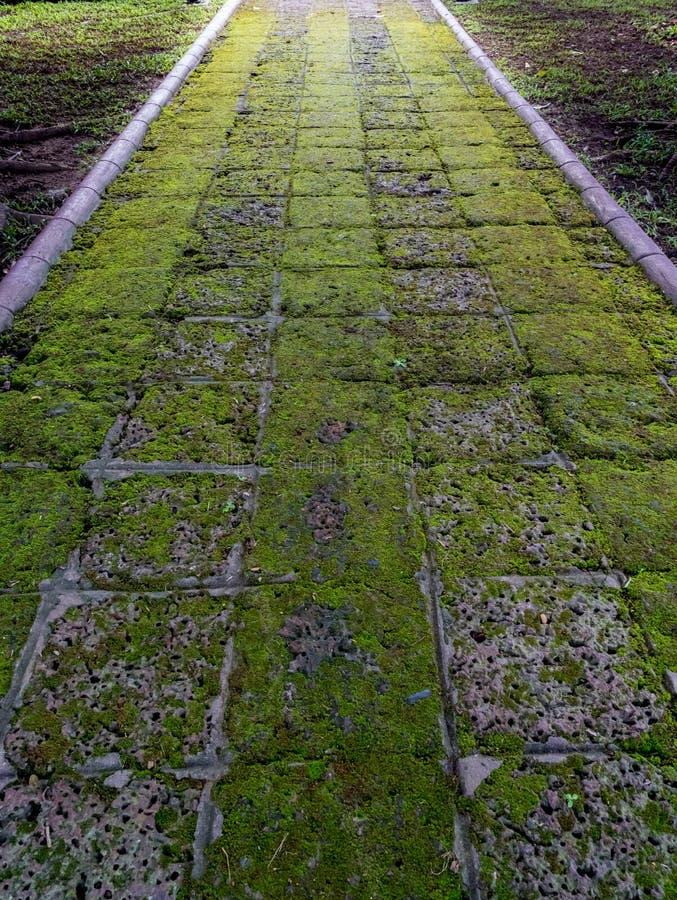 Camino de la laterita en jardín foto de archivo