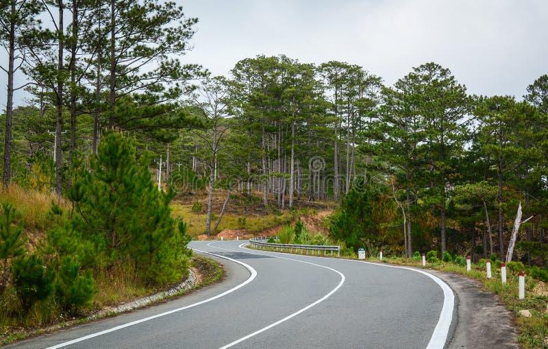 Camino de la montaña con muchos árboles de pino en el parque nacional de Bidup, Vietnam imagen de archivo libre de regalías