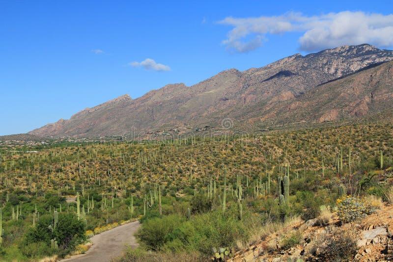 Camino de la montaña en barranco del oso en Tucson, AZ fotos de archivo