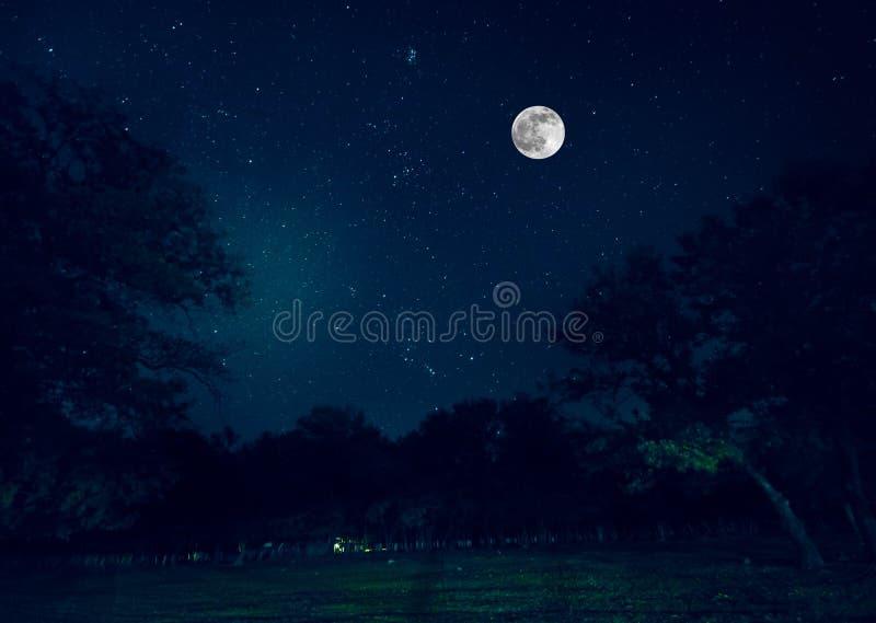 Camino de la montaña a través del bosque en una noche de la Luna Llena Paisaje escénico de la noche del cielo azul marino con la  fotos de archivo libres de regalías