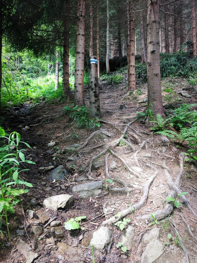 Camino de la monta?a fotografía de archivo