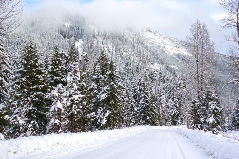 Camino de la nieve de Snoqualmie foto de archivo