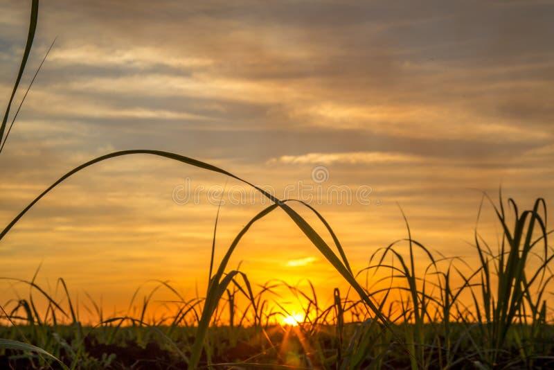 Camino de la plantación de la caña de azúcar imagen de archivo