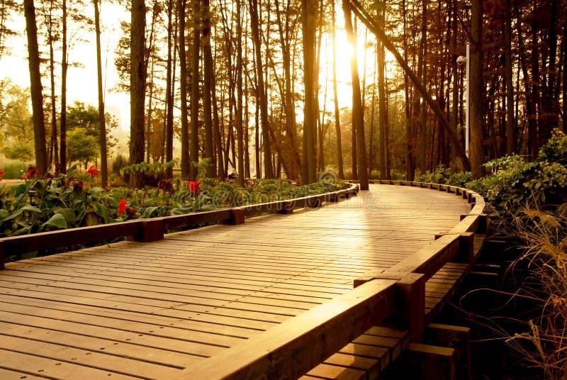 Camino de la puesta del sol foto de archivo libre de regalías