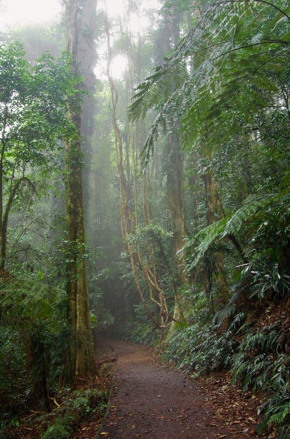 Camino de la selva tropical en árboles imagen de archivo libre de regalías