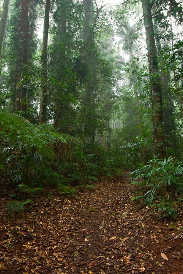 Camino de la selva tropical en árboles imágenes de archivo libres de regalías