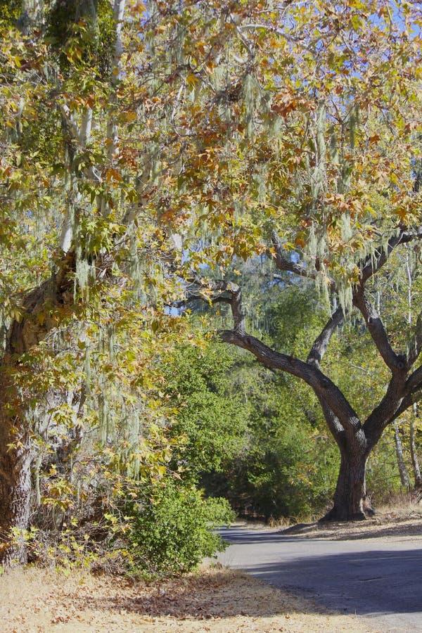 Camino de la tranquilidad de Napa California imagen de archivo libre de regalías