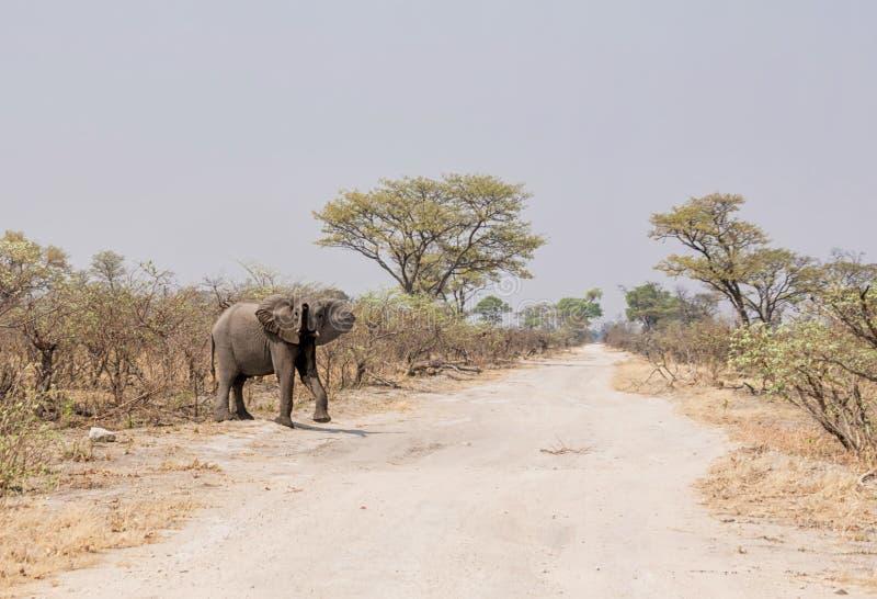 Camino de la travesía del elefante imágenes de archivo libres de regalías