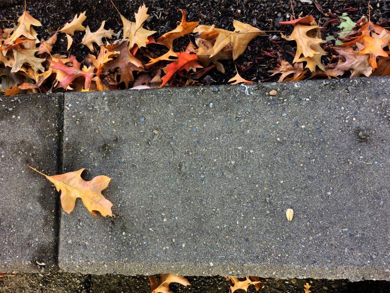 Camino de las hojas de la caída fotografía de archivo