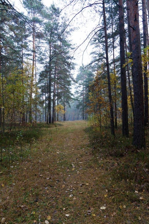 Camino de madera foto de archivo